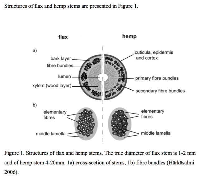 Structures of flax and hemp stems